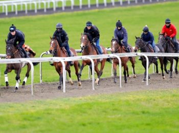 BHA Postpones Whip Investigation